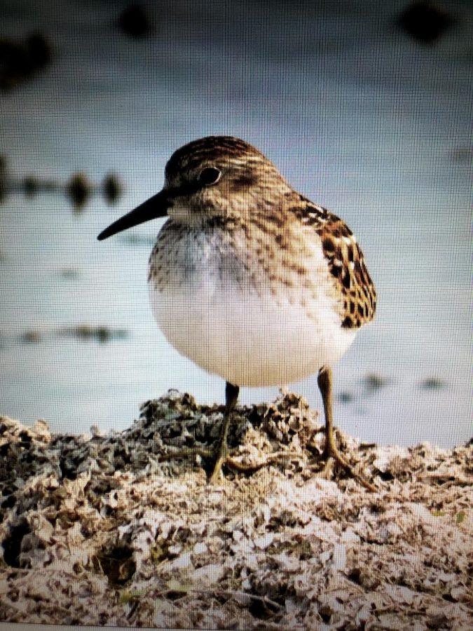 Dan Winkler:  NDA's Bird Expert, Environmentalist Extraordonaire